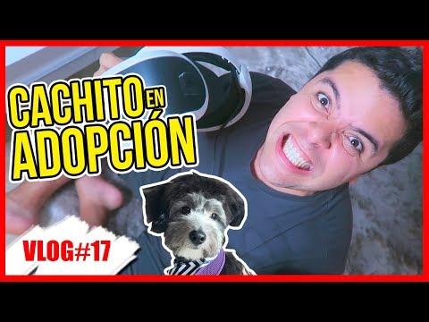 ¿CACHITO EN ADOPCIÓN? 12 Sept 2017