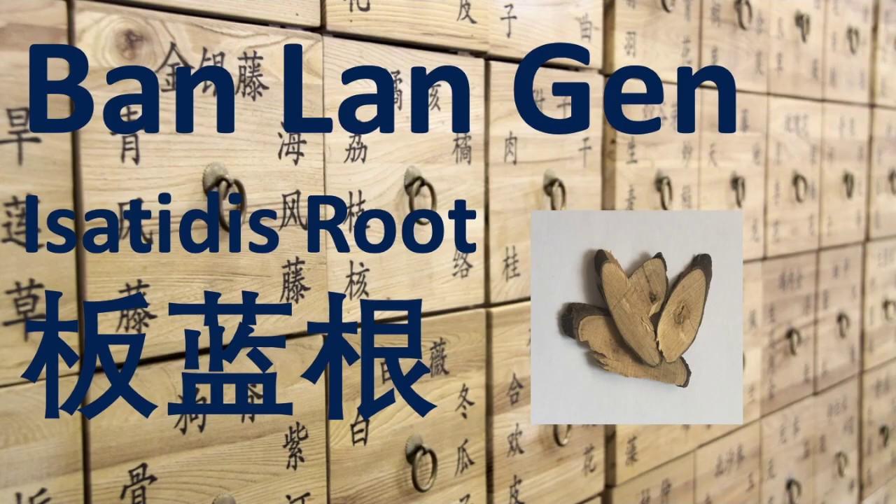 43 Chinese Herbal Medicine, Traditional Chinese Medicine, Herb – Ban Lan Gen (Isatidis Root)板蓝根-中医中药 #Herbalmedicine