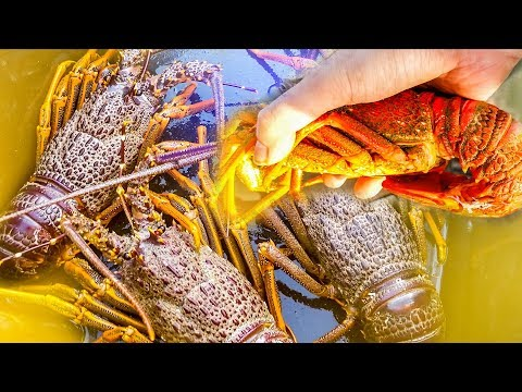 Crayfishing CATCH N' COOK // Gisborne, New Zealand