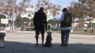 A Dog Aggressive Dog's First Day At Dog Man's Class