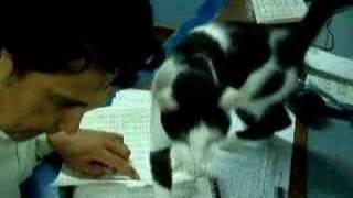 A cat in a workplace.