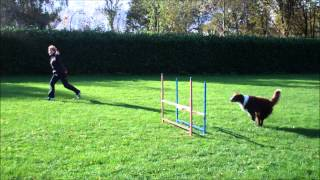 Gymnastics in dog agility (3) Thumbnail