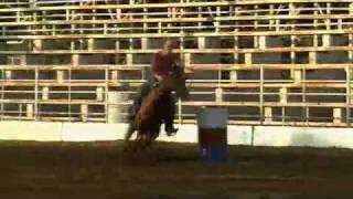Rose For Perks 2007 DASH FOR PERKS filly FOR SALE