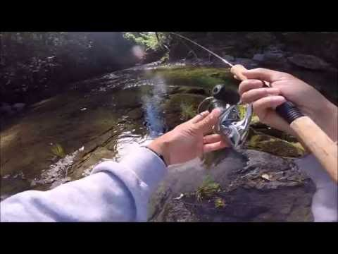 Catching Trout In A Creek With A Rooster Tail