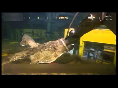 Attacked By A Monkfish