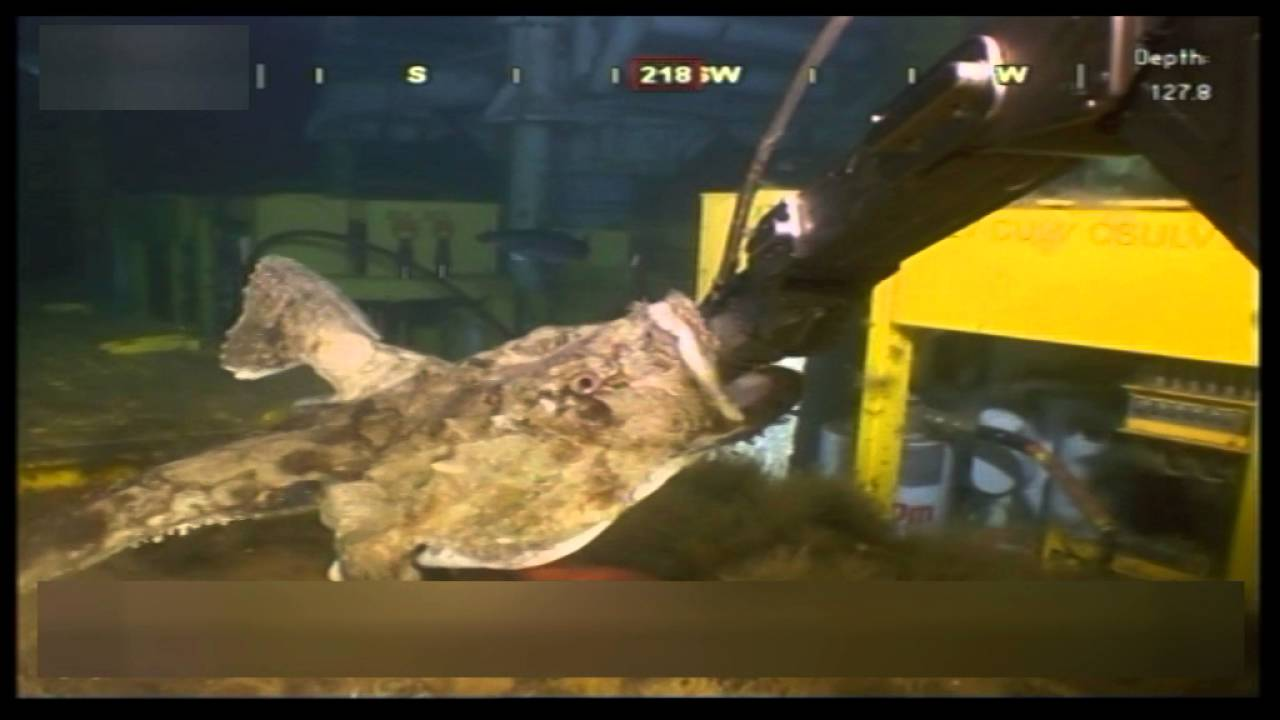 Attacked by a monkfish - YouTube for Monkfish Attack  76uhy