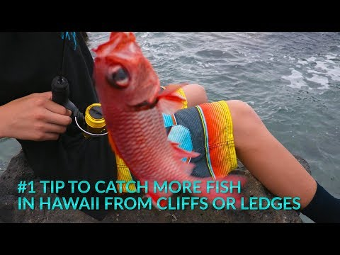 HOW To CATCH More FISH IN Hawaii FISHING FROM Cliffs OR Rocky Ledges- Kids Video