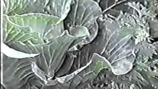 AGRICULTURA  DE SOL Y MALEZAS I
