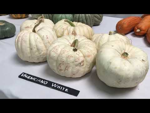 2017 National Heirloom Expo - Extended Display Hall video tour