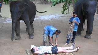 Эротический массаж слоников