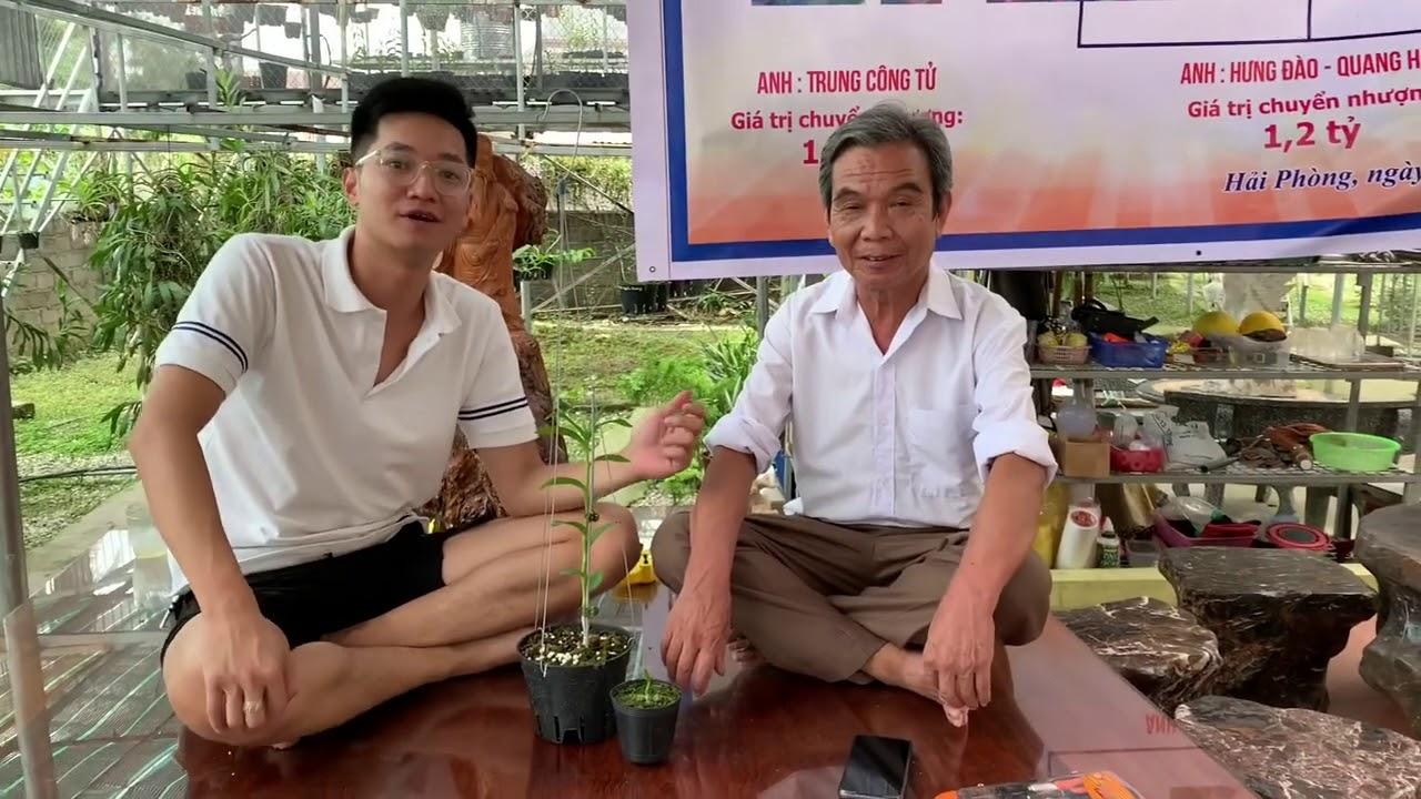 Bàn giao 5ct Phú Quí và Thảo Nguyên 2 cho Bác đến từ Hưng Yên    Lan Phi Điệp Hải Phòng