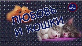 ***Любовь и кошки  Кошки тоже умеют любить***
