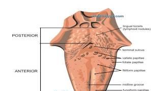 Carcinoma tongue powerpoint presentation
