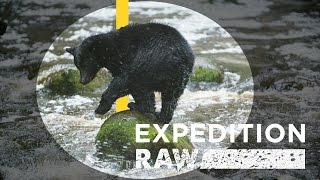 Watch a Hungry Bear Catch Salmon | Expedition Raw