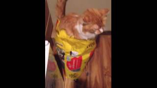 Cat Uses Bag of Litter instead of Box