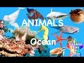 Learn Sea Animals Peekaboo Sea Animal Hide and Seek Ocean Water Animals Names and Sounds for Kids