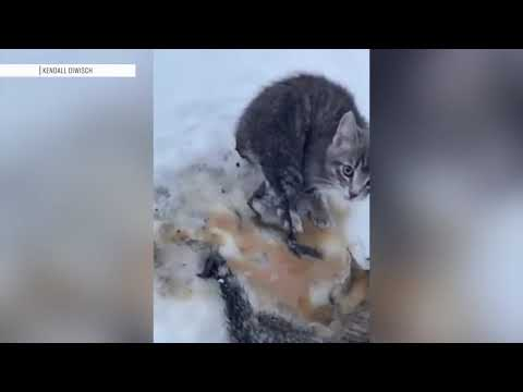 Check This Out: Oil Worker Uses His Coffee To Save Kittens Frozen To Ground