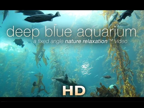 """Deep Blue Aquarium"" 1 HR Static Nature Relaxation Screensaver Video 1080p"
