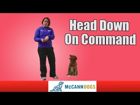 Dog Tricks: Head Down On Command