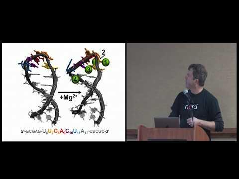 Thomas Cheatham: AMBER biomolecular dynamics simulations provide novel insight into nucleic acid ...