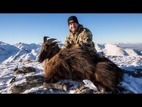 HUNTING TAHR ON GLACIERS IN NEW ZEALAND W/ MTN OPS