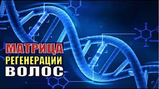 Матрица Профессора Гаряева для Лечения (Регенерации) Волос