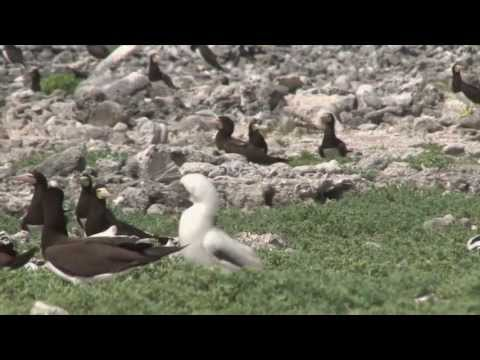 Connecting the Caribbean with Seabird Conservaton