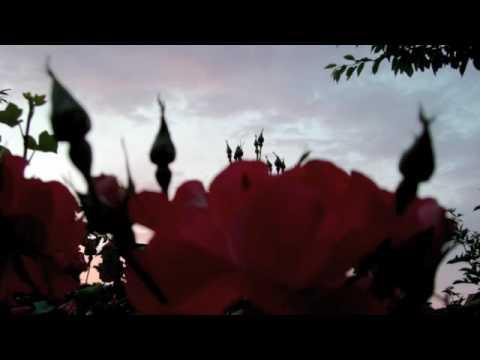 """""""Violin Paradise"""" Ave Maria Caccini"""