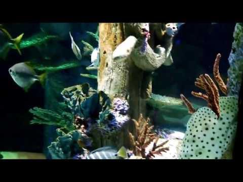 Sea Life Aquarium Charlotte Concord Mills North Carolina ...