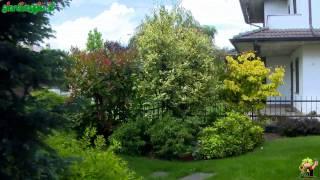 Come valutare il giardino: planimetrie e sviluppo