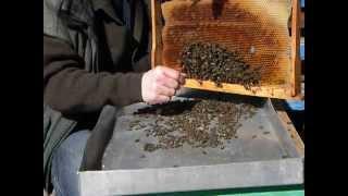 пчеловодство bee(пчелиный подмор)