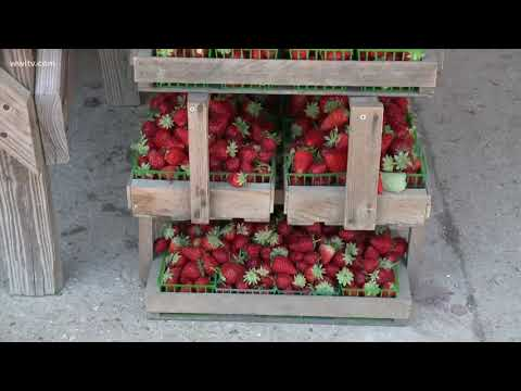 Access Code 70454 - exploring Ponchatoula - the 'Strawberry Capital of the World'