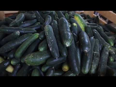 Gleaning to fight food waste