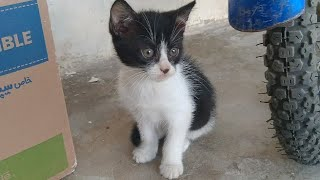 Rescued Adorable Kittens Meeting Rescued Cat Family || Rescued Cat family Sleeping In a Box