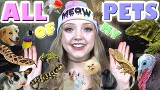 ALL OF MY PETS! 50+! thumbnail