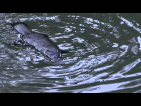 Queensland Water Critters