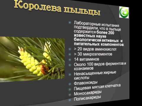 Пыльца сосны полезные свойства и противопоказания