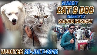 Cat & Dog For sale at Sunday Market Saddar Karachi (Jamshed Asmi Informative Channel) In Urdu/Hindi