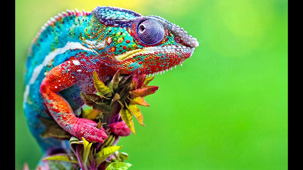 colorful animals things