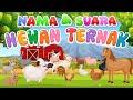 Belajar mengenal nama dan suara hewan | Hewan Ternak