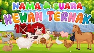 Download Lagu Belajar mengenal nama dan suara hewan | Hewan Ternak mp3