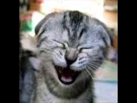 sons de gatos miando para