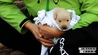 Rescate de 9 Cachorros Despues del Incendio de Valparaiso | Rescue of 9 puppies || ViralesChile