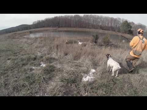 Alabama Bird Dogs