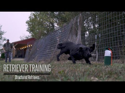 Teaching Your Gundog to Retrieve - Hunting Dog Training - YouTube