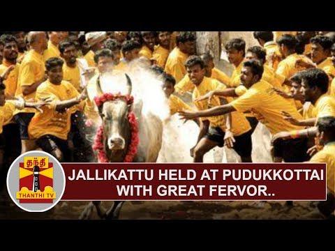 Jallikattu held at Pudukkottai with great fervor   Thanthi TV