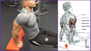 4 Ejercicios para el Triceps (Workout)   Fitness Body