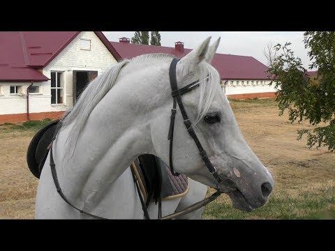 Вопрос: Сколько в среднем живет лошадь?