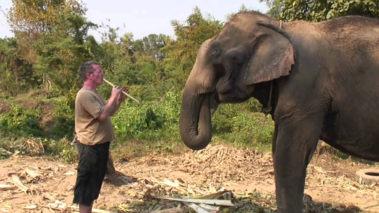 Music For An Elephant Thailand Youtube