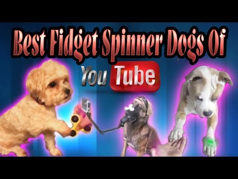 BEST OF Fidget Spinner Dogs of YouTube Compilation Trick Spinning Toy Craze FUNNY